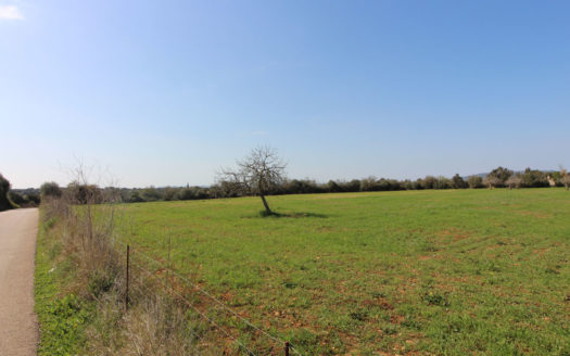 Plot for building in Manacor Mallorca