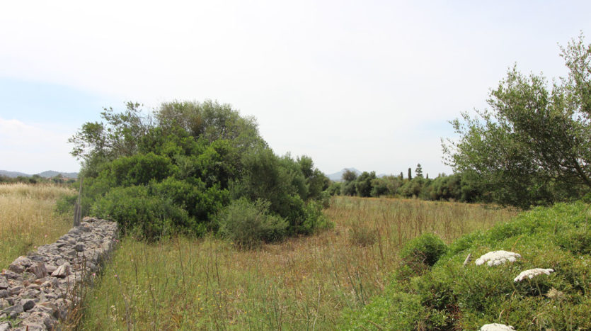plot in Manacor
