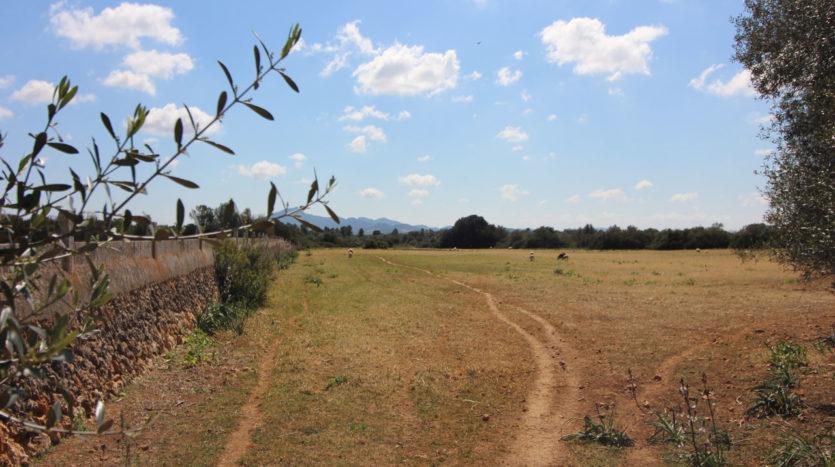 Alte rustikale Finca auf sehr großem Grundstück zur Reform in Villafranca Mallorca