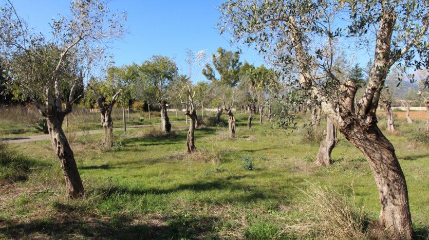 Finca rústica en Binissalem Mallorca para reformar